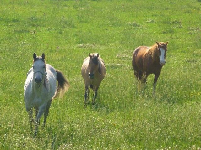 Luna Jack rejoins the herd.