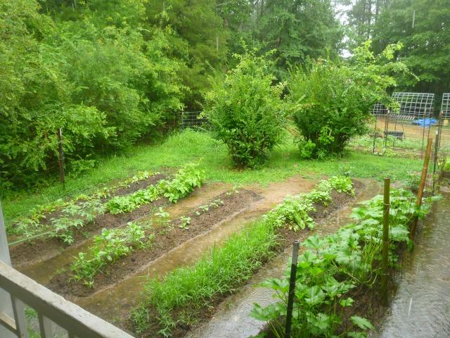 this morning's garden