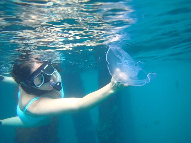 jellyfish wrangling
